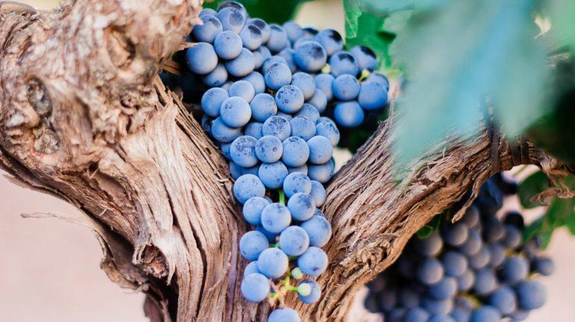 Winter in Málaga - wijn